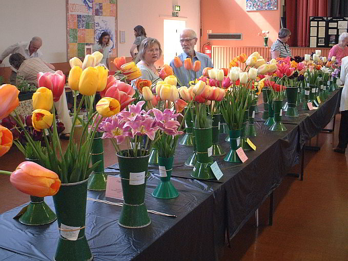 Dutch tulips Society's Main Anual Show